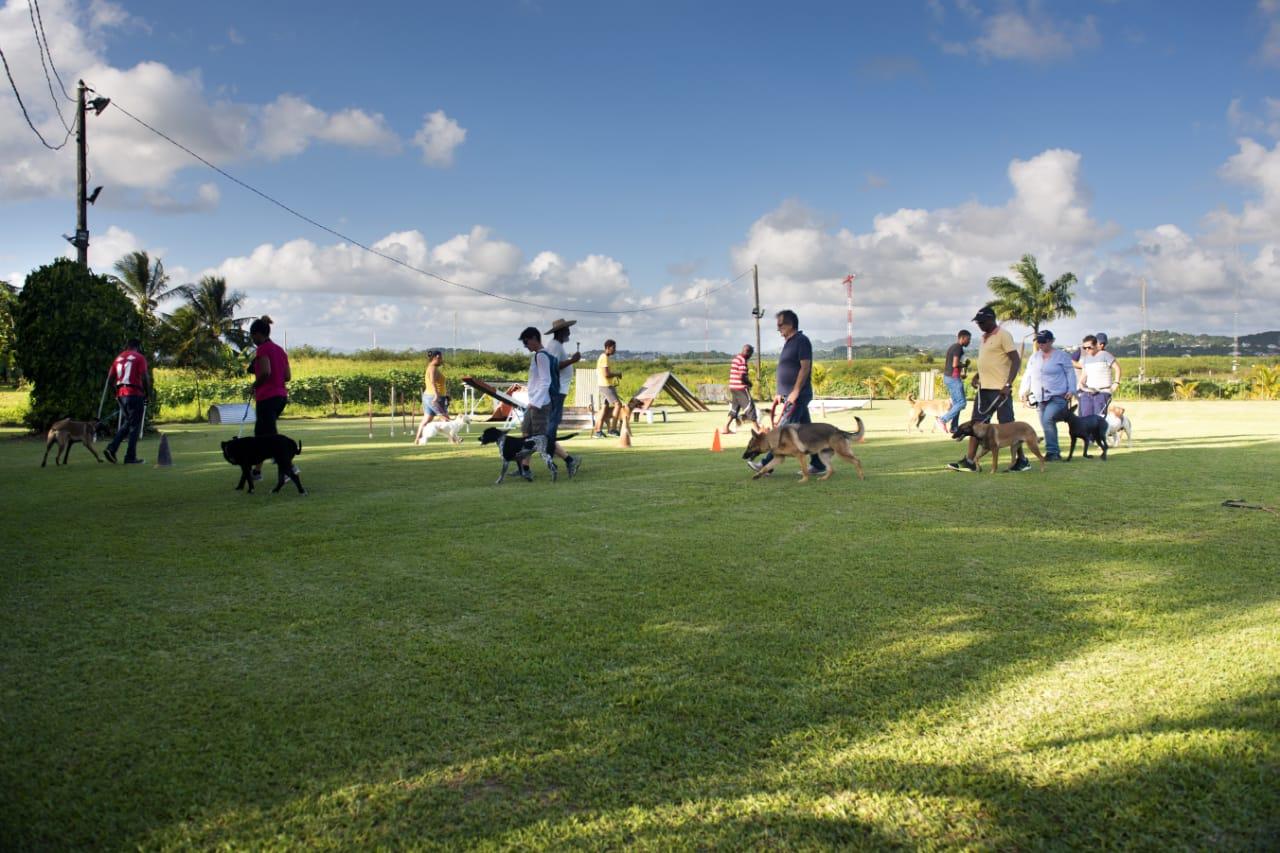 Activités sportives et canines - Club d'Education Canine Saléen en Martinique