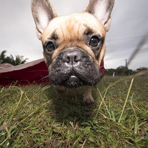 Bienvenue au Club d'Éducation Canine Saléen en Martinique - Sport canin Ring Agility Obéissance