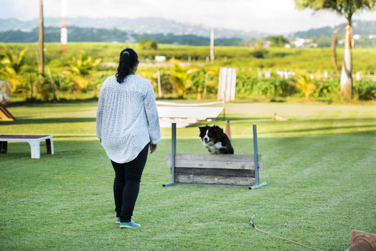 Foire à questions et Inscription du chien - Club d'Education Canine Saléen en Martinique