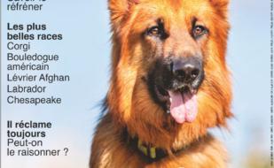 Article Spécial Chiens by France Press 77 - CECS Martinique Club d'Education Canine en Martinique